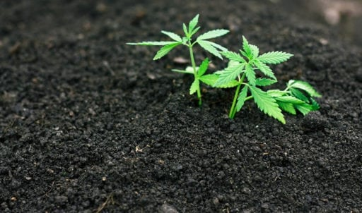 Image result for https://www.trellisgrows.com/